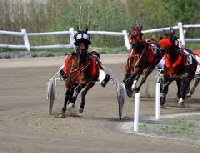 Victor Harbor Trotting Club | South Australia