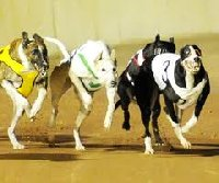 Cannington Greyhound Races | Western Australia