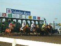 Columbus Ag Racing Park Ne Horse